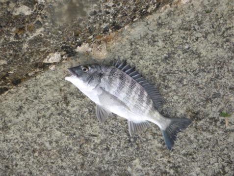 オルルド釣具の紹介