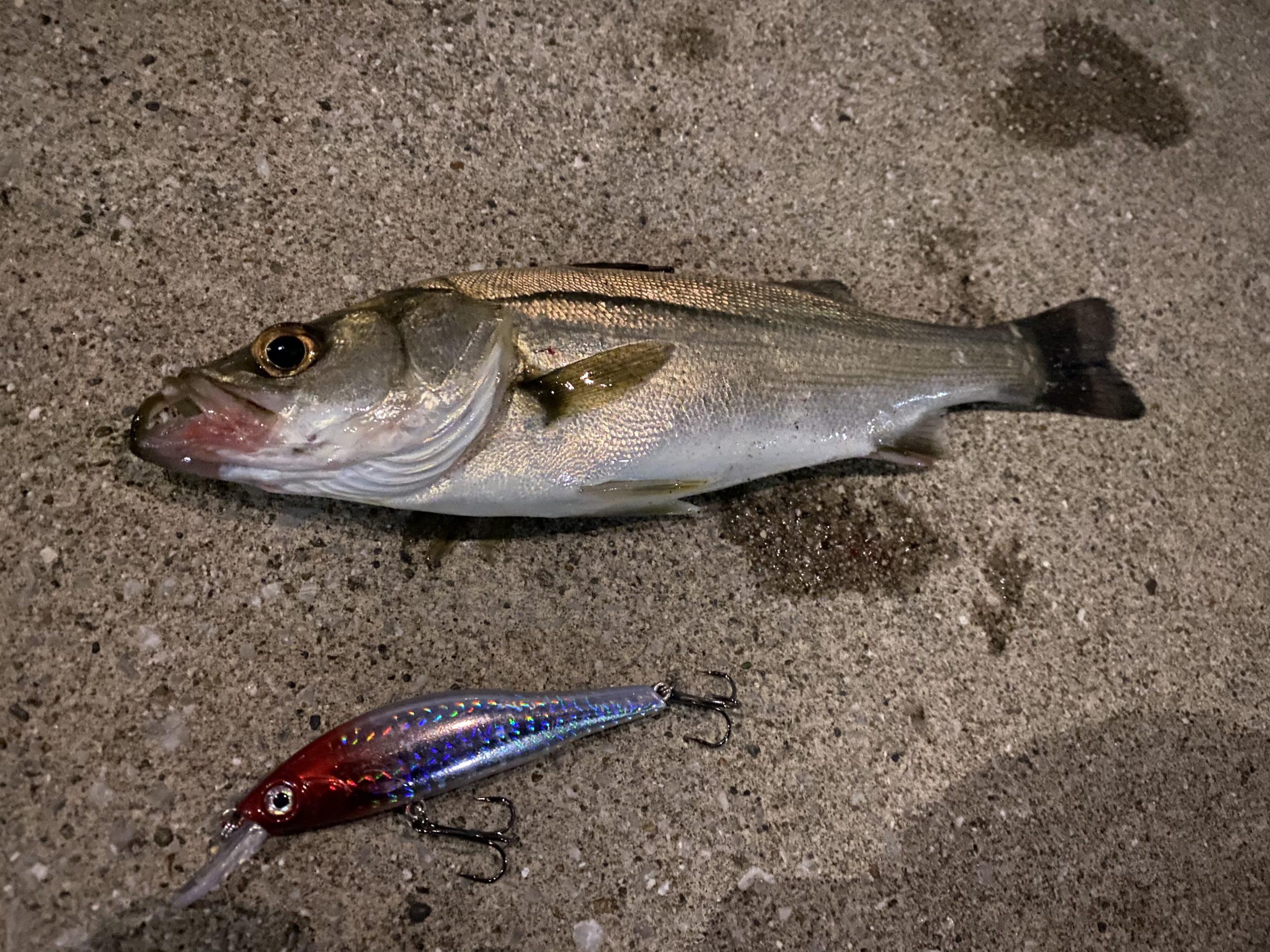 オルルド釣具 シンキングミノー